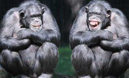 Gülmenin Evrimsel Kökeni Hayatta Kalma Güdüsü İle İlişkili