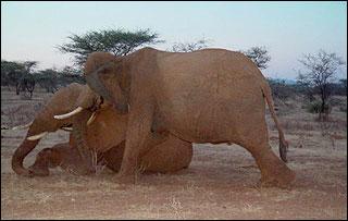 hayvanlar-nasil-yas-tutar-1-bilimfilicom