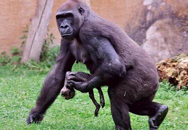 hayvanlar-nasil-yas-tutar-2-bilimfilicom