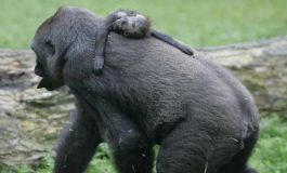 Hayvanlar Nasıl Yas Tutar?