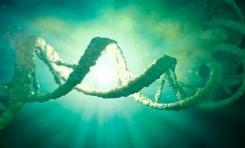 Bitkiler ile Hayvanlar Arasında DNA Aktarımı Gerçekleşebiliyor