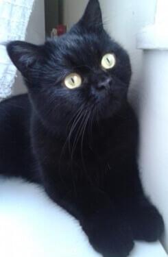 kediler-birlikte-yasadiklari-insanin-aksanina-gore-miyavliyor-bilimfilicom
