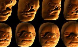 Yüzümüzdeki Kök Hücreler, Yüzümüzü Nasıl Oluşturuyor?