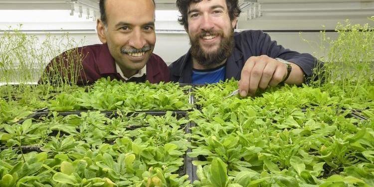 Bitkilerin Çiçeklenme Mekanizması Çözüldü