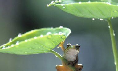 Bitkiler Yağmur Damlalarının Dokunuşunu Hissedebiliyor