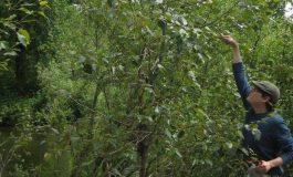 Ağaç Dallarındaki Bakterilerin Önemi Sanılandan Daha Büyük