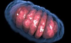 Mitokondri Bulundurmayan İlk Ökaryot Hücre Keşfedildi
