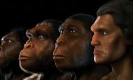 Yüksek Enerji Tüketimi, Diğer Primatlardan Daha Büyük Beyin Geliştirmemizi Sağlamış Olabilir