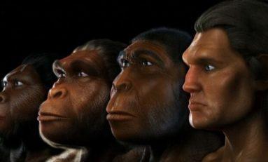 Yüksek Enerji Tüketimi, Primatlara Göre Daha Büyük Beyin Geliştirmemizi Sağlamış Olabilir