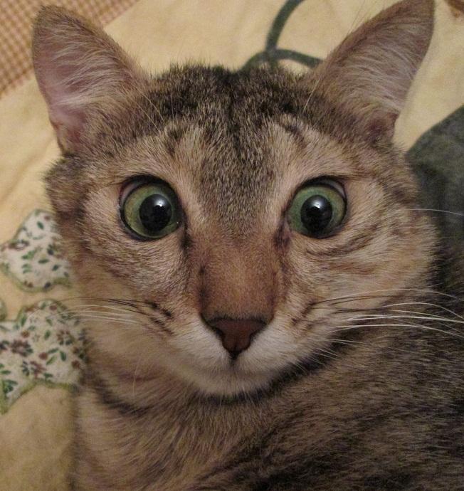 kediler-nedensellik-ilkesinin-icsel-kavrayisina-sahip-bilimfilicom