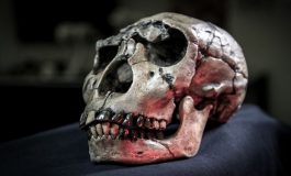 Evrim, Yirmilik Dişlerimizin Yok Olmasına Sebep Olacak