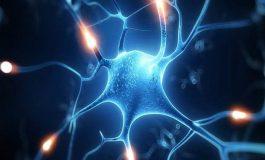 Hasar Gören Sinir Hücreleri Taşınabilir Mitokondrilerle Onarılacak