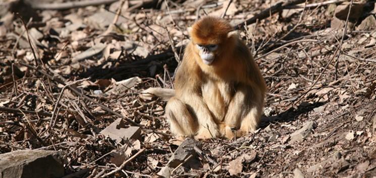 kalkık-burunlu-maymunlar-olulerinin-yasini-tutuyor-bilimfilicom