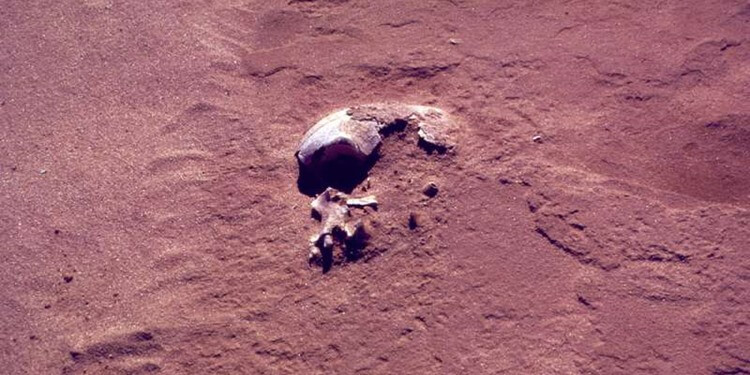 The original excavation of Mungo Man, found near Lake Mungo in southwestern New South Wales, Australia. Credit: Wilfred Shawcross. Read more at: http://phys.org/news/2016-06-conflicting-theories-mungo-debunked-aboriginal.html#jCp