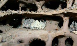 Tarihin En Eski Çiftçileri: Karıncalar