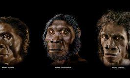 Avustralasyalı Aile Ağacında, Gizemli Antik İnsan Atası Bulundu