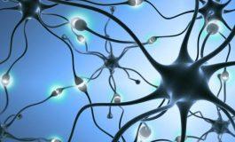 Beynimiz Hafıza Zincirlerini Nasıl Oluşturuyor?