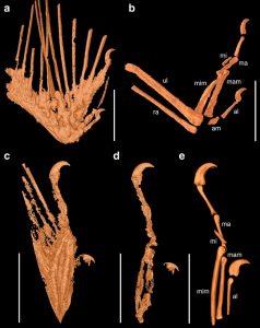 dinozor-kusu-kanadi-bulundu-bilimfilicom
