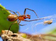 Kişilik Özellikleri Farklı Örümceklerin Varlığı, Koloniye Avantaj Sağlıyor