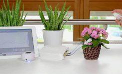 Bitkiler İçin Elektronik Çevirmen Hazır