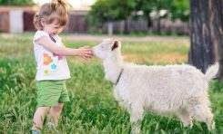 Keçiler İnsanın En Yakın Dostu Olabilir mi?