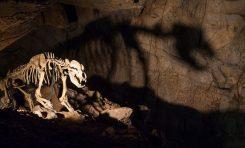 Antik Mağara Ayılarını Yok Oluşa Vejetaryen Diyet mi Sürükledi?