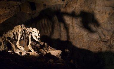 Antik Mağara Ayılarını Yok Oluşa Vejateryan Diyet Mi Sürükledi?