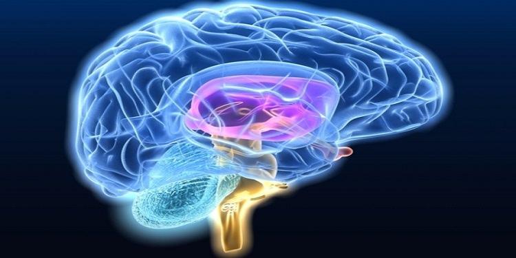 Beynimiz Nasıl Fizik Öğreniyor?