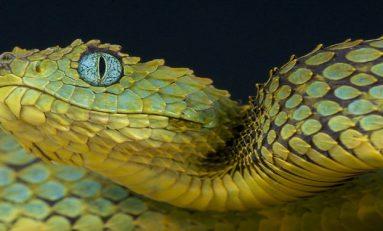 Görsel Adaptasyona Yeni Bir Bakış: Yılan Gözü