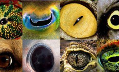 Omurgalılarda Gözün Evrimine Dair Yeni Bulgular