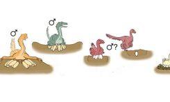 Dinozorlardan Kuşlara Uzanan Yolda Üreme Alışkanlıkları Nasıl Değişti?