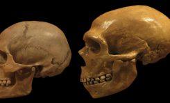 Neandertaller Parka Yapamadıkları İçin Hayatta Kalamamış Olabilirler