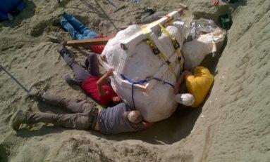 Büyük Ölçüde Korunmuş Bir T. Rex Fosili Daha Keşfedildi