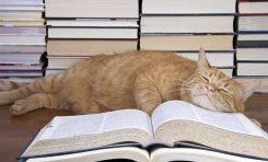 1975 Yılında, Bir Fizik Makalesinin Eş-Yazarı Bir Kediydi
