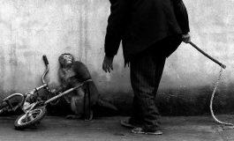 Hayvanlar da Bizim Gibi Acı Çekiyor Mu?