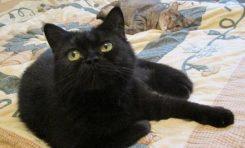 Kedilerin Tarihsel Yolculuğu DNA'larından Okunuyor