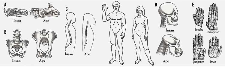 insani-insan-yapan-dik-durusudur-1-bilimfilicom