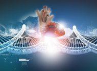 Kalp Krizi Anısı Genlerimize Kaydediliyor