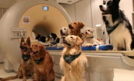 Köpekler Tekil Kelimeleri ve Söylenmek İsteneni Anlayabiliyor
