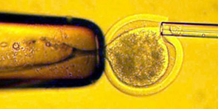 Partenogenot Embriyolarından Oluşan Fareler