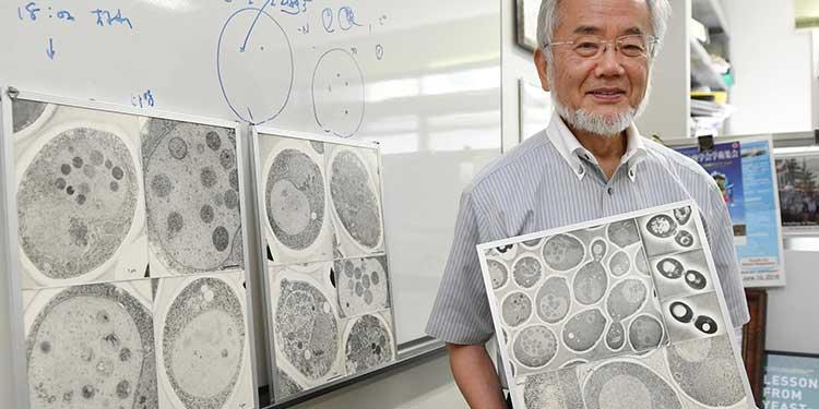 2016 Nobel Fizyoloji veya Tıp Ödülü Ohsumi'ye – Lizozoma Sığan 3. Ödül