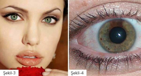 Şekil 3: Angelina Jolie'nin gözleri Şekil 4: Kuzenimin gözü ☺