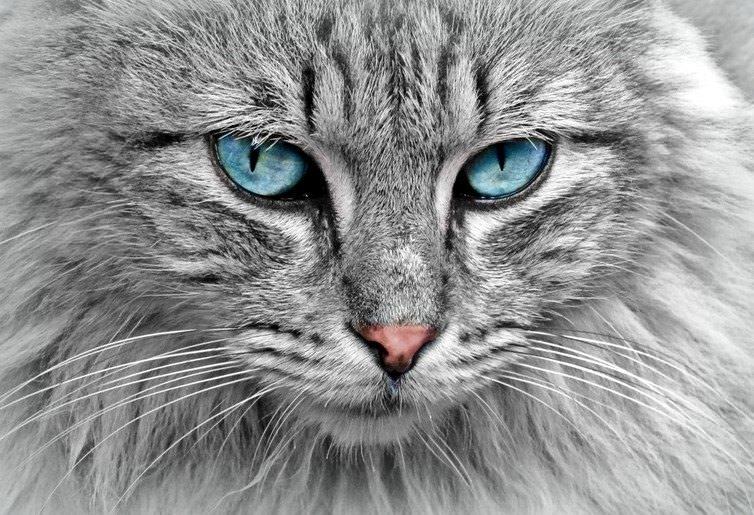 Kedinin tam olarak nereye baktığını anlamak oldukça zordur. Kaynak: Pixabay