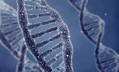 DNA Onarımına Yardım Eden Proteinin Yapısı Çözüldü