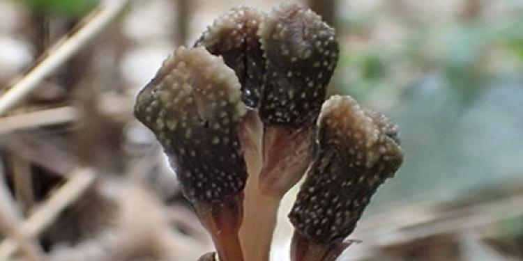 Fotosentez Yapmayan ve Çiçek Açmayan Bitki Keşfedildi
