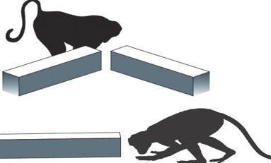 Maymunlar da Neyi Bilmediklerini Biliyorlar