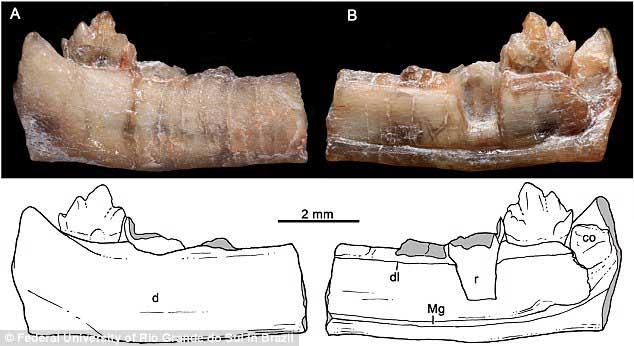 sinodont-memelilerin-atasi-olan-surungen-2-bilimfilicom