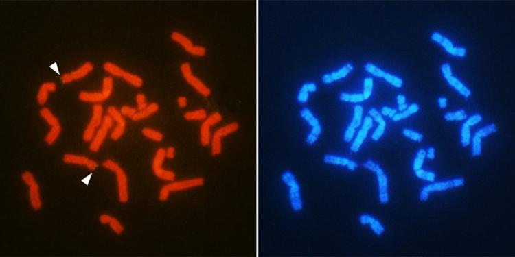 Y Kromozomu Olmadan Nasıl Erkek Olunur?