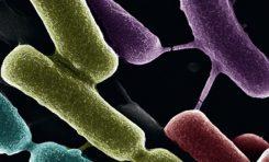 Bakteriler Konuşarak Bağışıklık Tepkisi Oluşturuyor