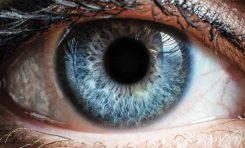 Gözün Evrimi